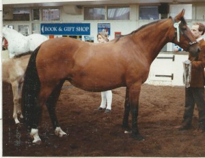 1990 - Centella III - Supreme and Nat.CH Mare 1990