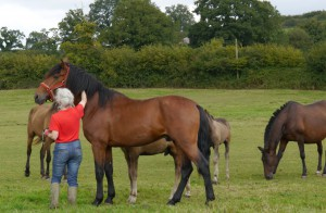 2013-09-12 Pinturero P II with Mary and his mares crpd flpd