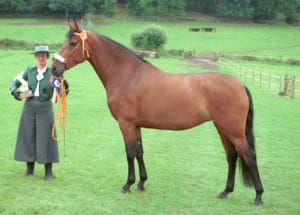 Canna - CH Partbred mare 2001 Nat Show