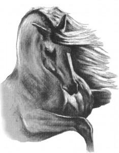 Rearing Horse illust-JL