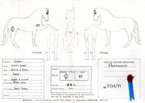 BAHS Certificate of Registration and Pedigree 2- 1983