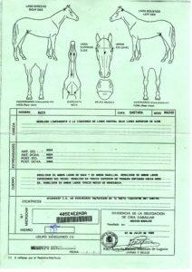 Cria Caballar Cert of Inscription and Genealogy 2- 1997