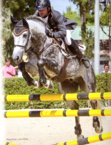 Odalisco III - Show-Jumping phase 2015