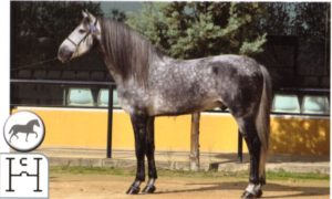 Orador XLII JRR for Eventing