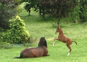 Chiquita at 2wks old with Saragossa in 2007